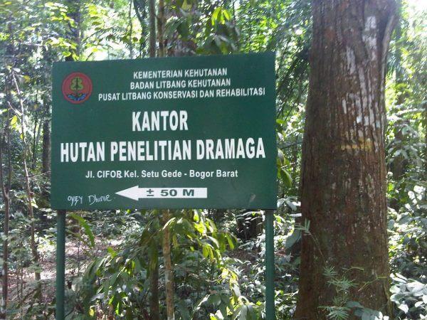 Hutan Penelitian Dramaga (CIFOR)