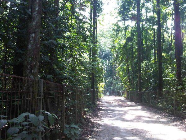 Jalan hutan Dramaga - Hutan Penelitian Dramaga