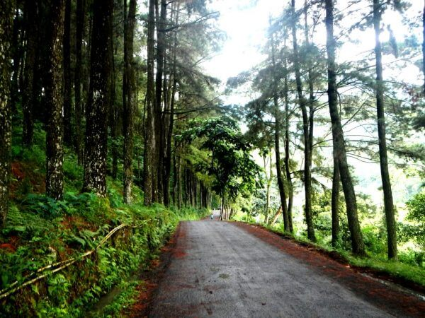 Hutan Pinus - Curug Nangka