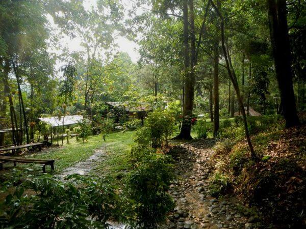 Suasana pepohonan menuju Penangkaran Rusa Cariu