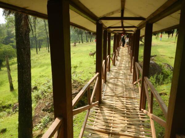 Jalan bambu menuju Penangkaran Rusa Cariu